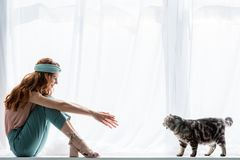 Happy young woman sitting on windowsill. With tabby cat stock photo