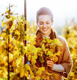 Happy woman standing in autumn vineyard and looking on bra Royalty Free Stock Images