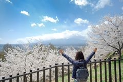 Happy Young Woman traveling with beautiful pink Cherry Blossom and Mount Fuji at Chureito red Pagoda temple area. Spring Season at stock photos