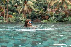 Happy young woman in a tropical infinity pool. Luxury resort on Bali island. Royalty Free Stock Photo