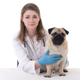 Happy young woman vet doctor with pug dog isolated on white Royalty Free Stock Photos