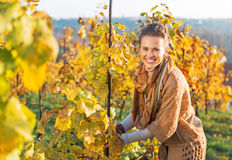 Happy young woman in vineyard caring for bushes Stock Photo