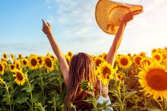 Young woman walking in blooming sunflower field raising hands, jumping and having fun. Summer vacation royalty free stock photos