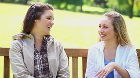 Happy young women chatting. In a park stock video