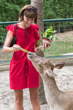 Happy youngwomanl feeding beautiful deer from hands in a tropical Bali Zoo park, Indonesia. stock image
