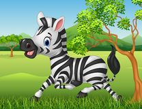 Happy zebra running in the jungle Royalty Free Stock Photography