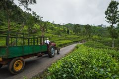 Haputale,斯里兰卡- 2018年4月18日:驾驶老拖拉机的农夫在种植园 免版税图库摄影