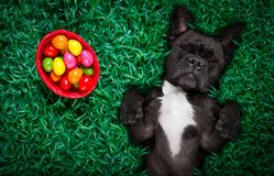 Hapy easter dog with eggs Stock Image