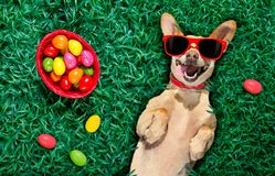 Hapy easter dog with eggs Stock Photography