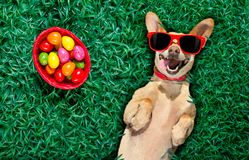 Hapy easter dog with eggs Stock Photo