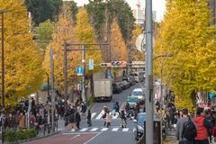 Harajuku, Tóquio, Japão - 21 de dezembro de 2018: Opinião quando a árvore da nogueira-do-Japão girar amarelo na queda no Tóquio,  fotografia de stock royalty free