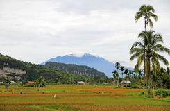 Harau Valley in West Sumatra, Indonesia Stock Image