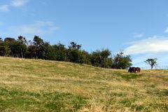 Harberton estate is the oldest farm of Tierra del Fuego Stock Photography