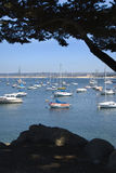 Harbor. Boats in a harbor in Monterey, CA Royalty Free Stock Image