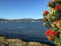 Harbor, Otago, New Zealand. Flowering bush along coastline of harbor at Otago, New Zealand on sunny day Stock Photo