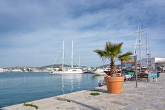 Harbor with palm tree Royalty Free Stock Photography