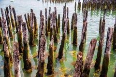 Harbor Pilings Stock Image