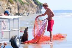 harbor rescued seal Στοκ Εικόνες