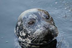 Harbor seal stock photos
