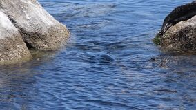Harbor Seal and Cormorants
