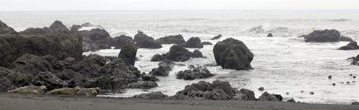Harbor Seals Stock Photos
