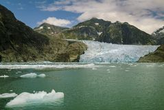 Harbor Seals on a LeConte Glacier Ice Flow Royalty Free Stock Images