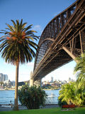 Harbour Bridge. From Rocks side with palmtree Royalty Free Stock Image
