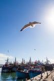 Harbour of Essaouira, Morocco Royalty Free Stock Photos
