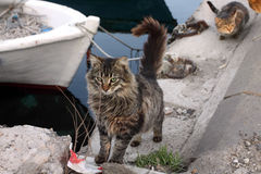 Harbour's cats Royalty Free Stock Images