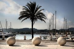 Harbour scene with boats and palm tree. The harbour of Ibiza, san Antonio in sunset light Stock Photos