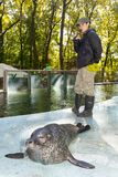 Harbour seal training. SZEGED, HUNGARY - SEPTEMBER 26. 2018 - Harbour seal Phoca vitulina training in Szeged Zoo royalty free stock photos