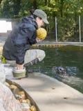 Harbour seal training stock photos