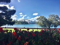 Harbour View från botaniska trädgårdar, Sydney Royaltyfri Fotografi