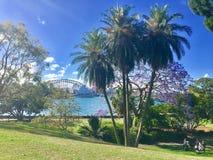 Harbour View från botaniska trädgårdar, Sydney Fotografering för Bildbyråer