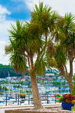 Harbourside Cordyline Royalty Free Stock Photography