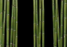 Hard bamboe stock afbeelding