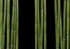 Hard bamboo Stock Image