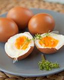Hard- boiled eggs Stock Images