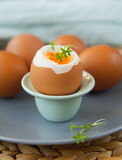 Hard- boiled eggs Stock Image