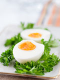 Hard-boiled eggs with parsley Stock Photography