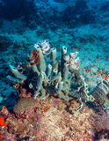 Hard Colorful Corals at sea Bottom, Bali, Indonesia. Colorful Tropical Reef Landscape with Hard Corals, bali, Indonesia Stock Images