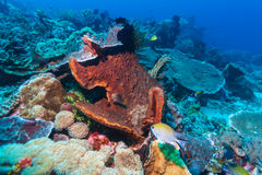Hard Colorful Corals at sea Bottom, Bali, Indonesia. Colorful Tropical Reef Landscape with Hard Corals, bali, Indonesia Stock Photos