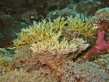 Hard Coral stock photography
