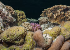 Hard coral biodiversity Stock Photo