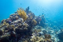 Underwater coral reef landscape full of fish Stock Photography
