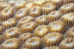 Hard coral detail Stock Photos