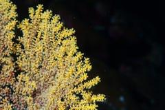 Hard coral macro detail Royalty Free Stock Image