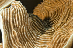 Hard coral macro detail while diving in Indonesia Royalty Free Stock Photo