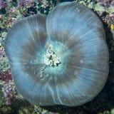 Hard coral macro detail from Raja Ampat, Papua Indonesia Royalty Free Stock Photos