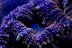 Hard coral macro on night dive light Royalty Free Stock Image